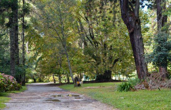 Escalada nas Árvores – Zoom Aventura