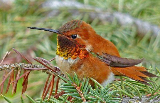 Observação de Aves é tema de curso em Campos do Jordão