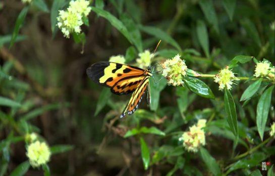 Conheça o borboletário Flores que Voam, de Campos do Jordão-SP