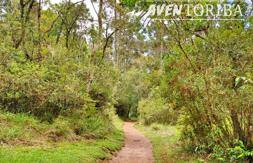 aventoriba_trilha-celestina-horto-florestal_hotel-toriba-campos-do-jordao-2