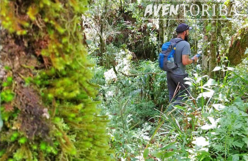 aventoriba_trilha-celestina-horto-florestal_hotel-toriba-campos-do-jordao-3