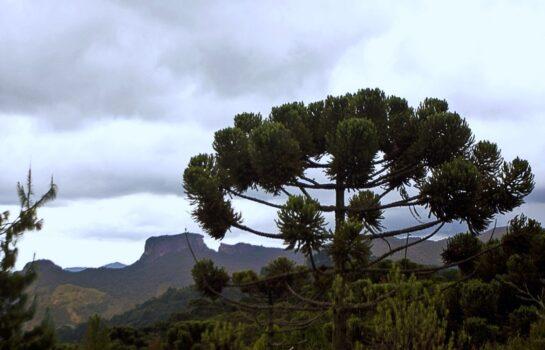 A importância das árvores no nosso dia a dia e como preservar.